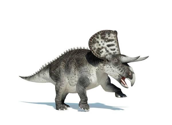 Prehistoric Era Wall Art - Digital Art - Zuniceratops Dinosaur, Artwork by Leonello Calvetti