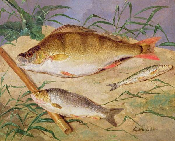 Wall Art - Painting -  An Angler's Catch Of Coarse Fish by D Wolstenholme