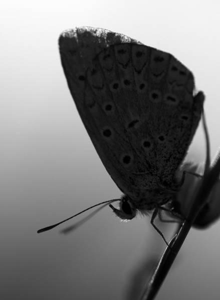 Photograph -  Butterfly by Odon Czintos