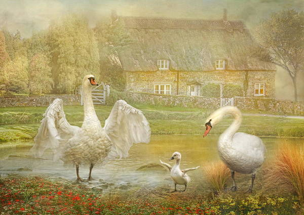 Cygnet Wall Art - Photograph -  Early Preparations by Trudi Simmonds