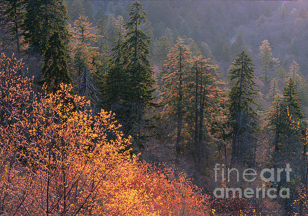 Wall Art - Photograph -  Great Smoky Mountains Morning by Sandra Bronstein