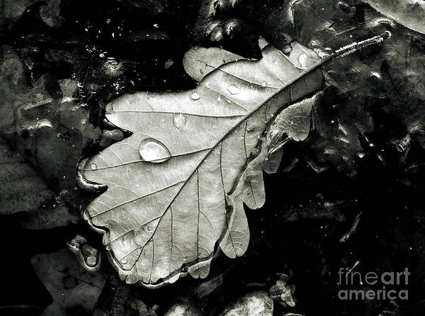 Spider Rock Photograph -  Leaf by Odon Czintos