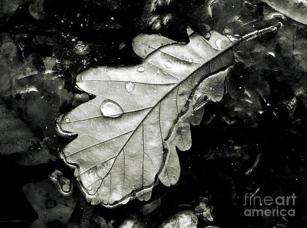 Photograph -  Leaf by Odon Czintos