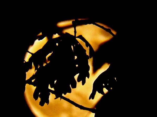 Wall Art - Pyrography -  Moonlight Shadows by Gloria Warren