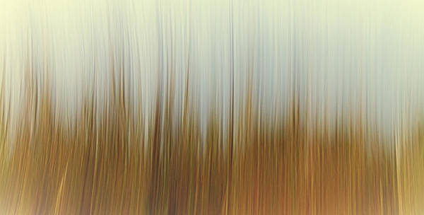 Windswept Photograph -  Movement by Stelios Kleanthous