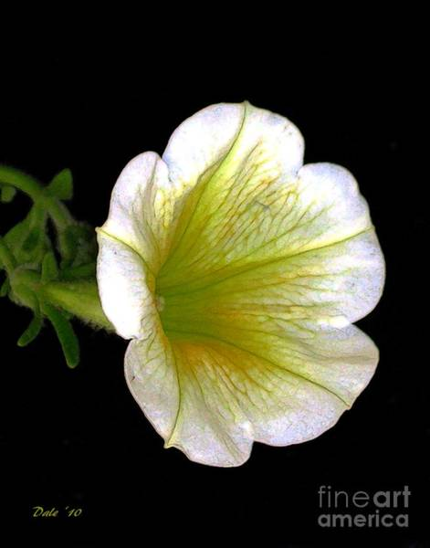 Digital Art -  Petunia by Dale   Ford