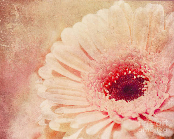 Photograph -  Pinked by Traci Cottingham