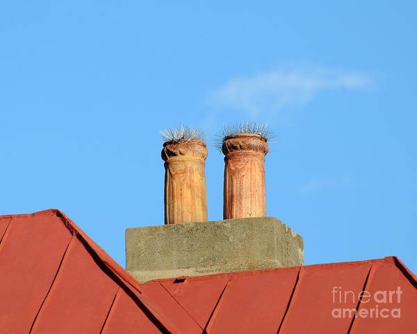 Wall Art - Photograph -  Prickly Perches by Al Powell Photography USA