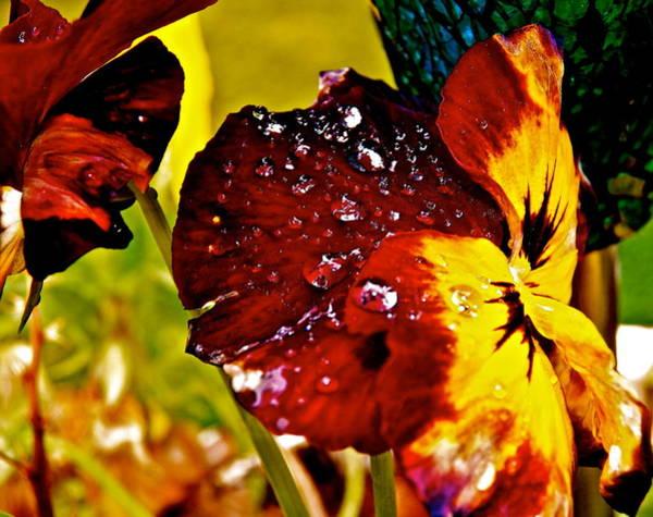 Wall Art - Photograph -  Rain Drops Spring Shower by Gloria Warren