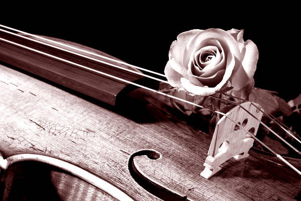 Rose Violin Viola Art Print