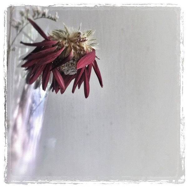 Wall Art - Photograph - ... The End Of Romance ... (nuthin' To by Brian Cassey