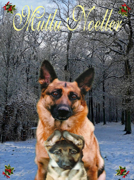 Holiday Cottage Mixed Media -  Turkish Holiday German Shepherd And Puppy by Eric Kempson