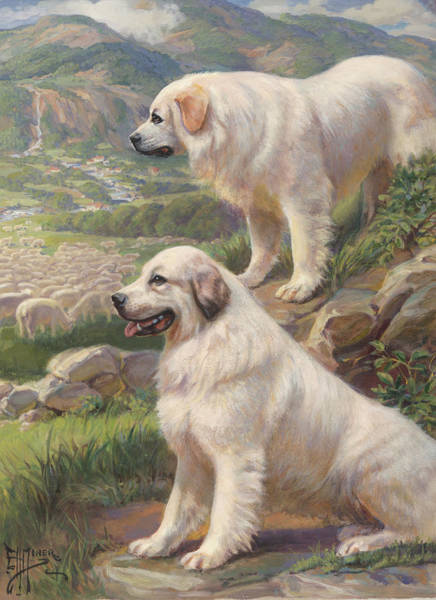 Great Pyrenees Photograph - 02, 12/27/06, 444 Pm, by National Geographic