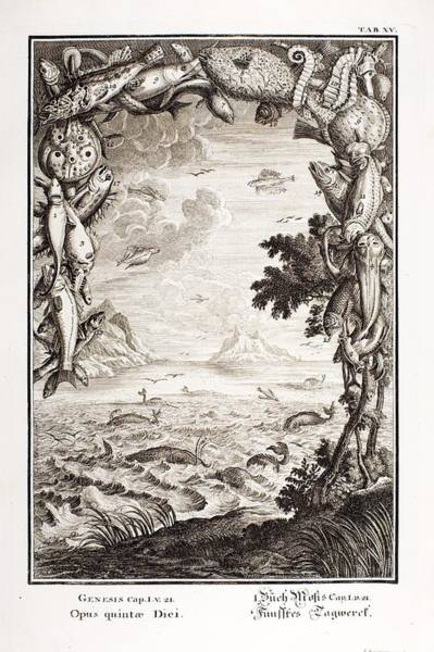 Creationist Wall Art - Photograph - 1731 Johann Scheuchzer Creation 5th Day by Paul D Stewart