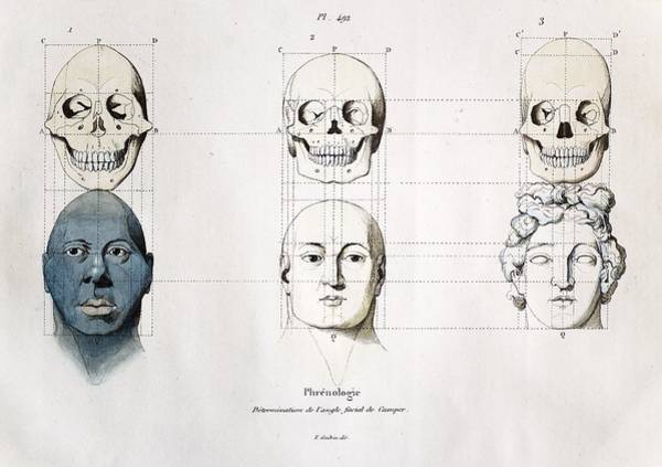 Comparative Anatomy Wall Art - Photograph - 1760a Petrus Camper Facial Angle Eugenics by Paul D Stewart