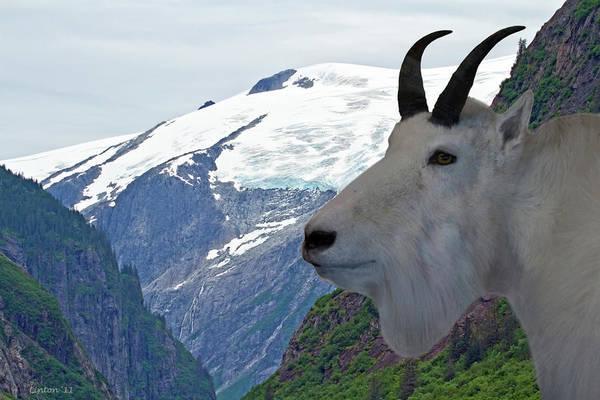 Wall Art - Photograph - Alaska Mountain Goat by Larry Linton