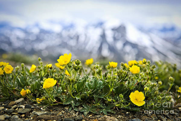 Canadian Rocky Mountains Photograph - Alpine Meadow In Jasper National Park by Elena Elisseeva