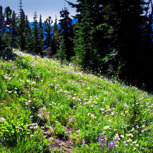 Photograph - Alpine Meadow Vii At Mount Rainier by David Patterson