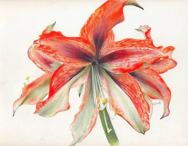 Amaryllis Painting - Amaryllis by Penrith Goff