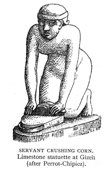 Photograph - Ancient Egyptian Servant by Granger