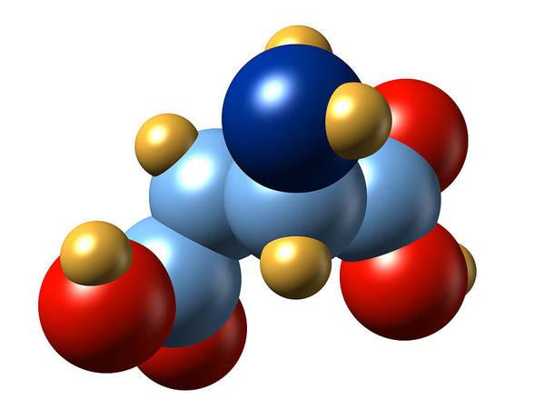 Asps Photograph - Aspartic Acid, Molecular Model by Dr Mark J. Winter