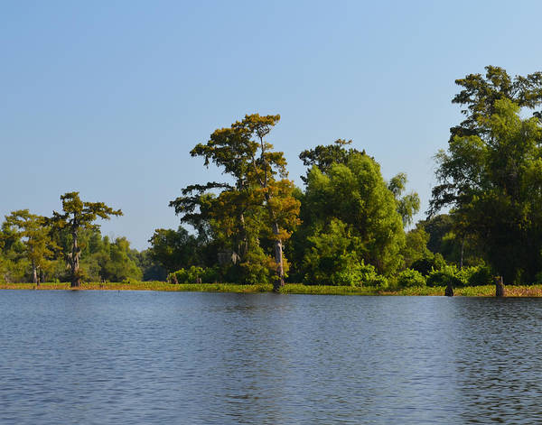 Photograph - Atchafalaya Basin 29 by Maggy Marsh