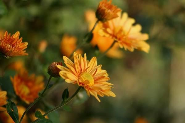 Wall Art - Photograph - Autumn Flowers by Valia Bradshaw
