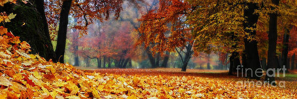 Photograph - Autumn In The Woodland by Hannes Cmarits