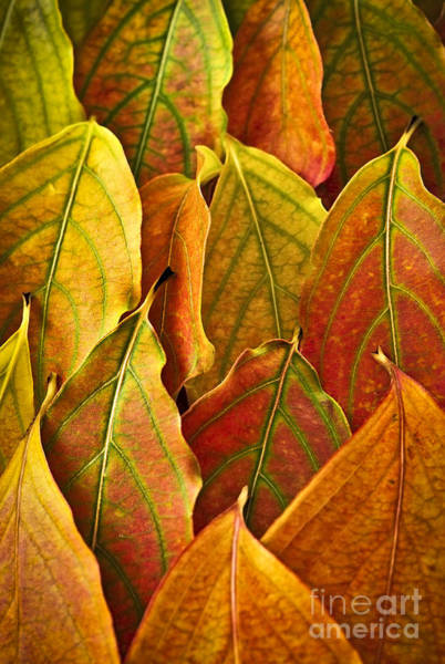 Seasons Change Wall Art - Photograph - Autumn Leaves Arrangement by Elena Elisseeva