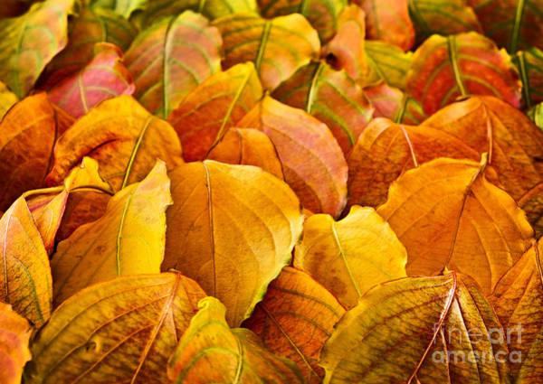 Seasons Change Wall Art - Photograph - Autumn Leaves  by Elena Elisseeva