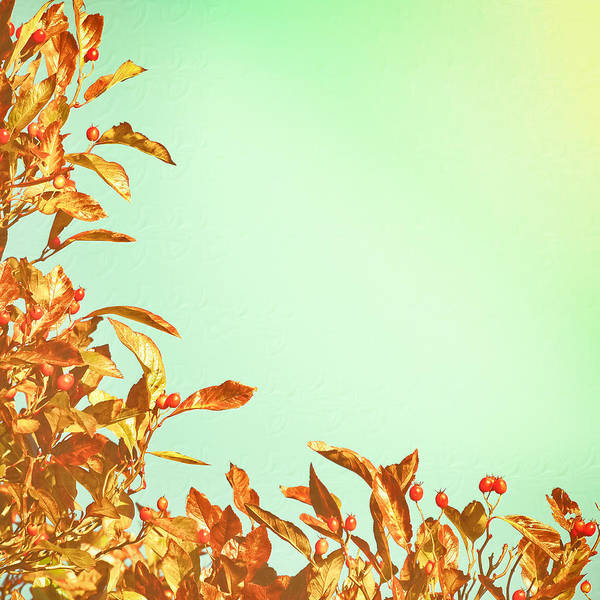 Blue Berry Photograph - Autumn Leaves by Tom Gowanlock