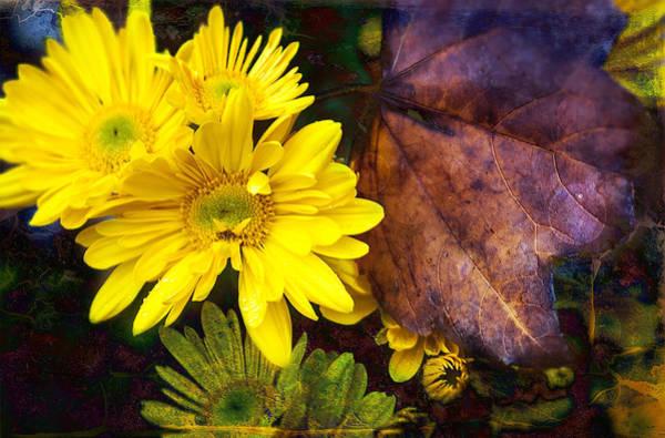 Rader Photograph - Autumn Lights by Kelly Rader