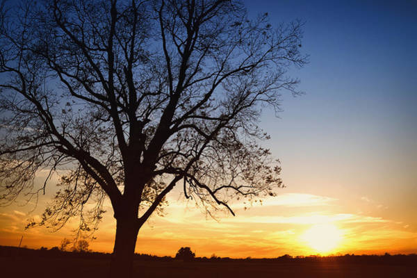 Wall Art - Photograph - Bare Tree At Sunset by Skip Nall