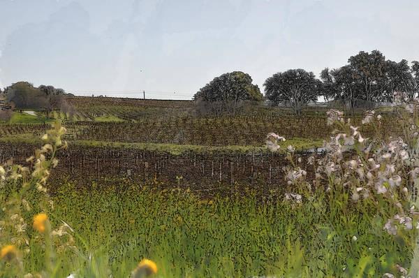 Digital Art - Beautiful California Vineyard Framed With Flowers by Brandon Bourdages