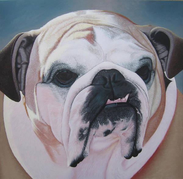 English Bulldog Painting - Bella by Steven Sullivan