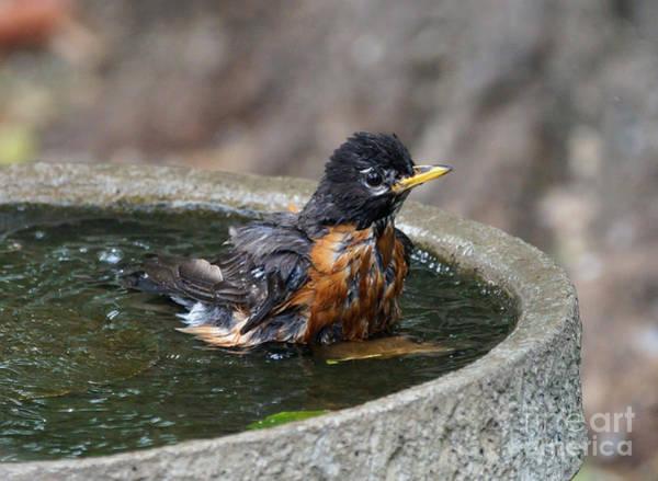 Wall Art - Photograph - Bird Bath Fun Time by Lori Tordsen