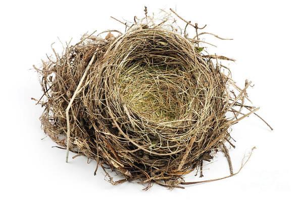 Empty Nest Wall Art - Photograph - Birds Nest by Photo Researchers, Inc.