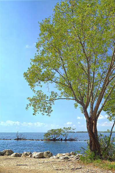 Photograph - Biscayne National Park-1 by Rudy Umans