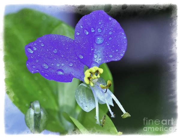 Photograph - Blue by David Waldrop