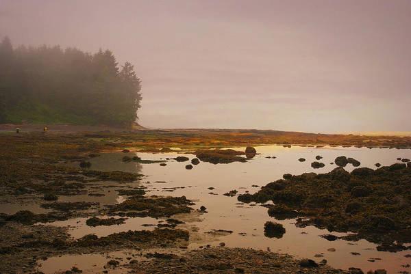 Photograph - Botanical Beach by Marilyn Wilson