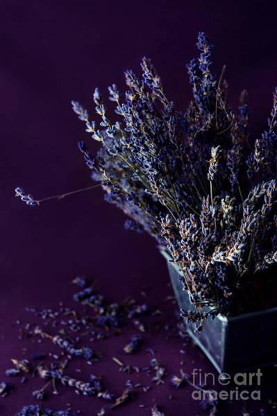 Wall Art - Photograph - Bouquet Of Lavender by HD Connelly