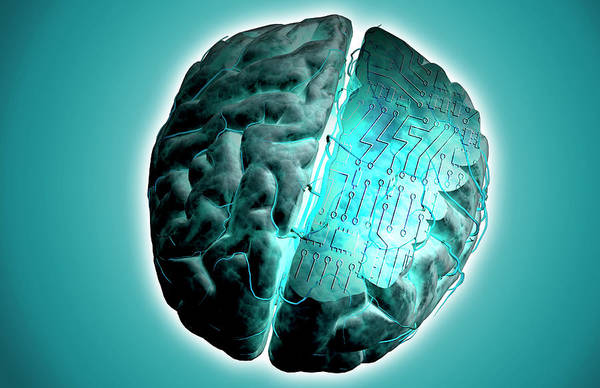 Organ Digital Art - Brain With Circuit Board by MedicalRF.com