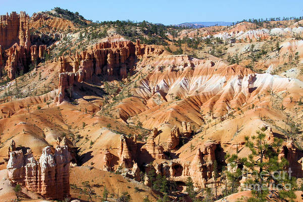 Photograph - Bryce Canyon by Adam Jewell