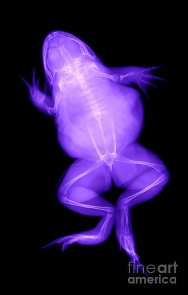 Bull Frog Photograph - Bullfrog by Ted Kinsman