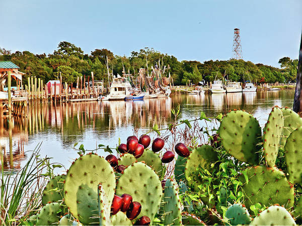 Photograph - Cactus By The Sea by Mike Covington