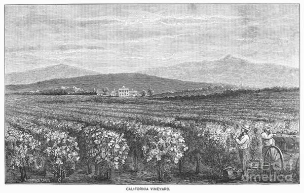Wall Art - Photograph - California: Vineyard by Granger