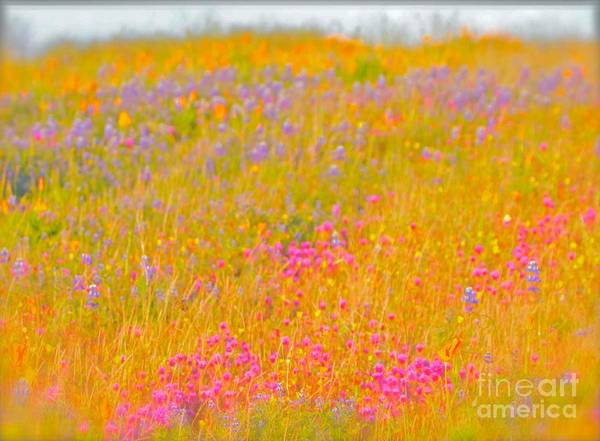 Gus Photograph - California Wildflowers No. 1 by Gus McCrea