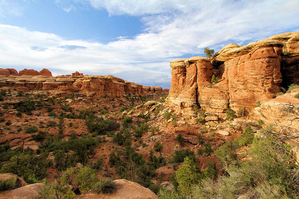 Photograph - Canyonlands Needles District by Adam Jewell