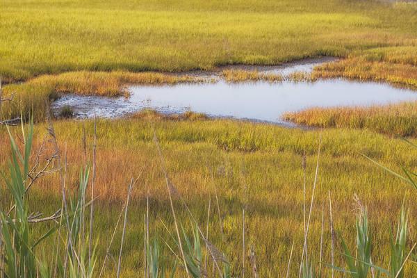 Photograph - Cape May Marsh Grass by Tom Singleton