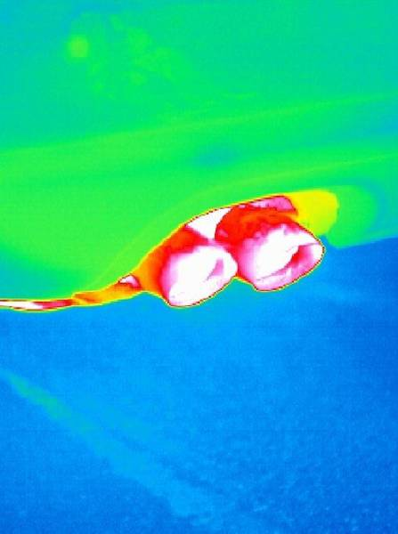 Dual Exhaust Photograph - Car Exhaust, Thermogram by Tony Mcconnell
